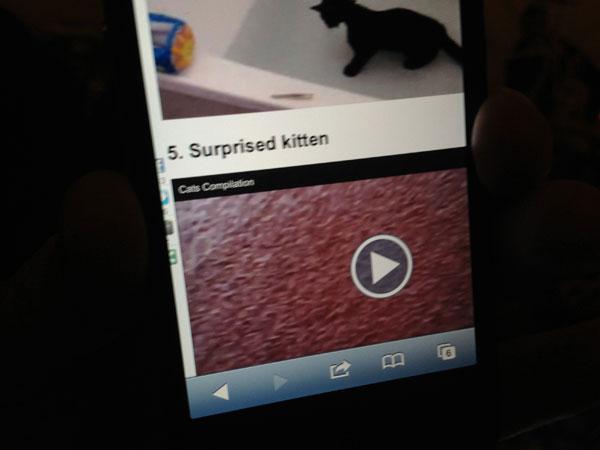 surprised-kitten